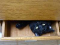 Marilyn Fenner, Hospital Cat
